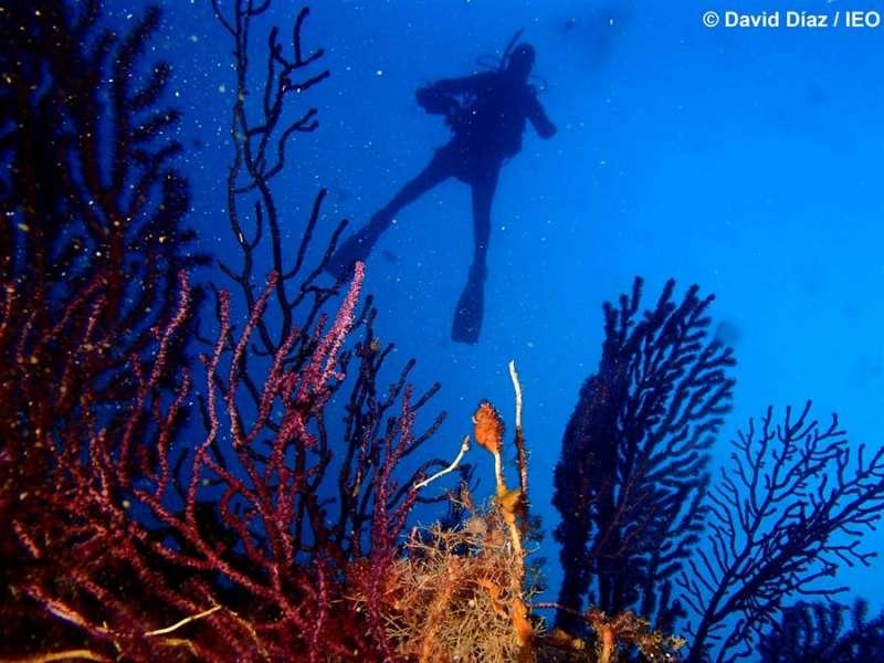 Fondo marino, en una imagen del Instituto Español de Oceanografía (IEO).