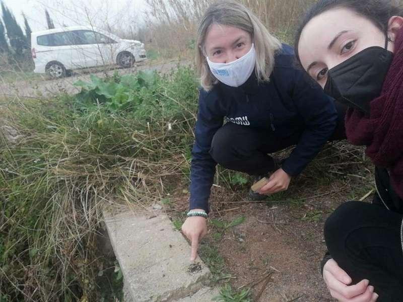 Dos personas muestran los excrementos de nutria detectados en el río, en una imagen facilitada por el Ayuntamiento de Borriana, EFE