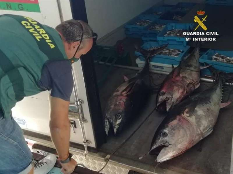 Parte del pescado intervenido, en una imagen de la Guardia Civil.EFE