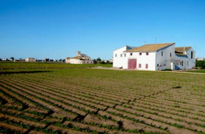 Huerta del término de Alboraya. EPDA
