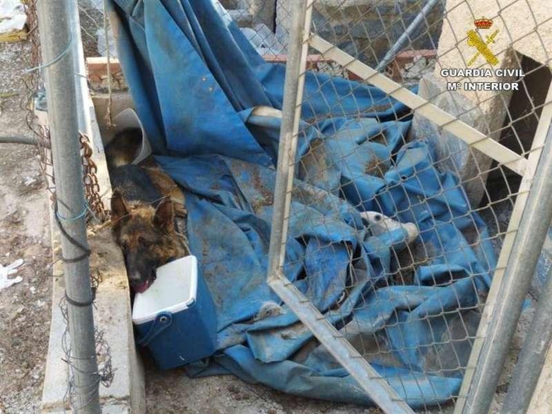El perro, antes de ser rescatado, en una imagen de la Guradia Civil.