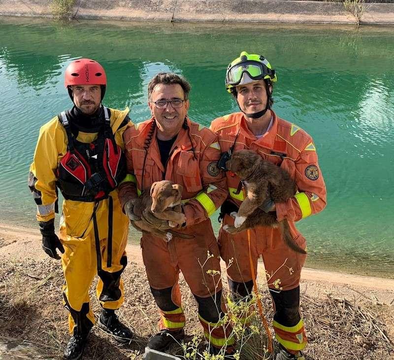 Bomberos con los cachorros rescatados en una imagen facilitada por el Consorcio Provincial de Bomberos. EFE