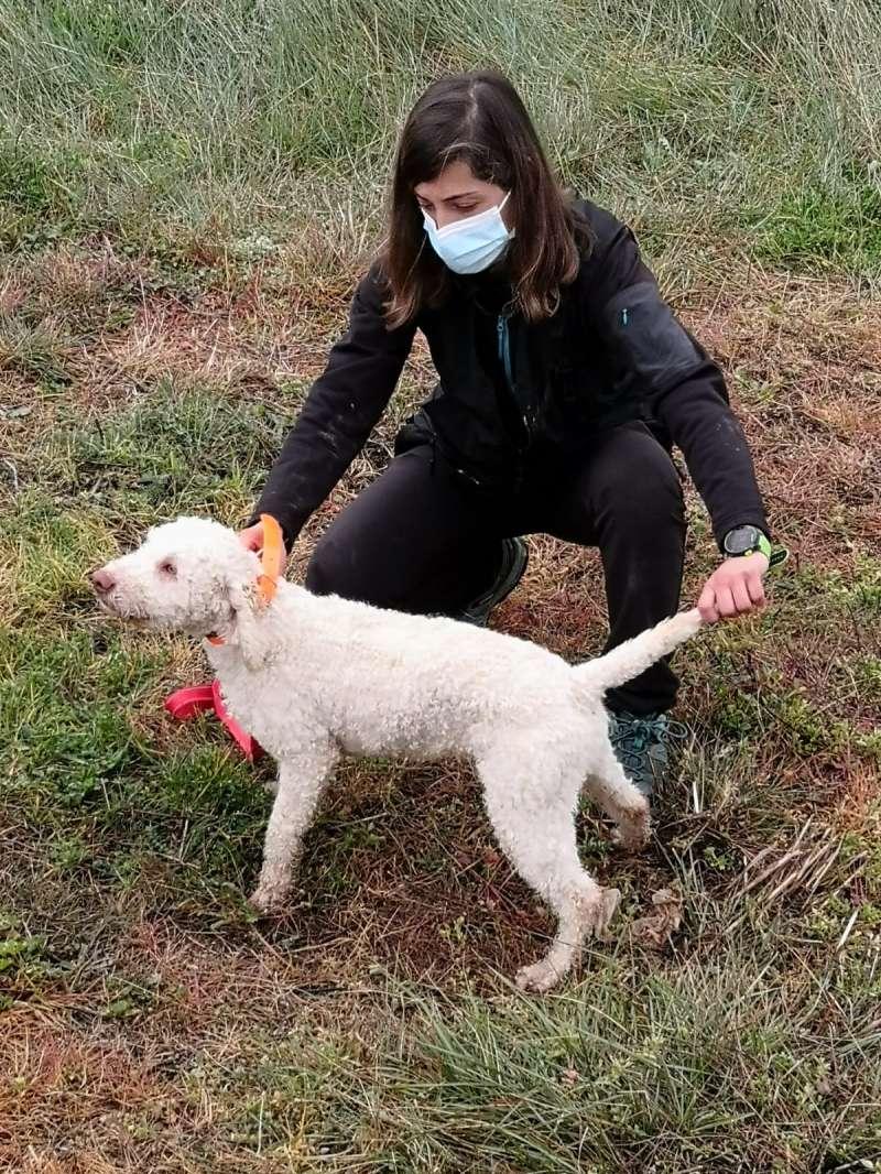 Adiestramiento de perro trufero en Villanueva de Viver