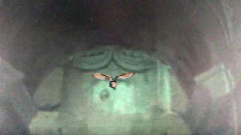 Imagen captada de una de las lechuzas. EPDA