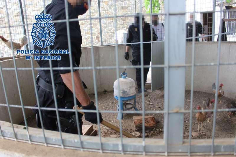 Imagen de la Policía Nacional durante la operación.