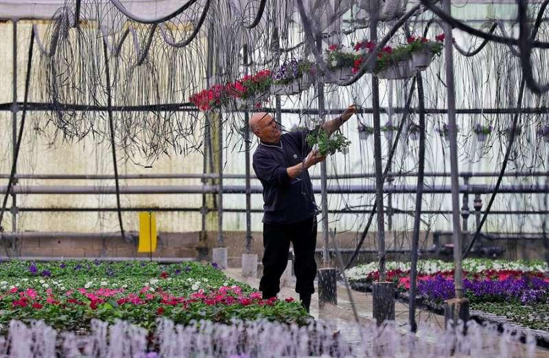 Un vivero de flores. EFE
