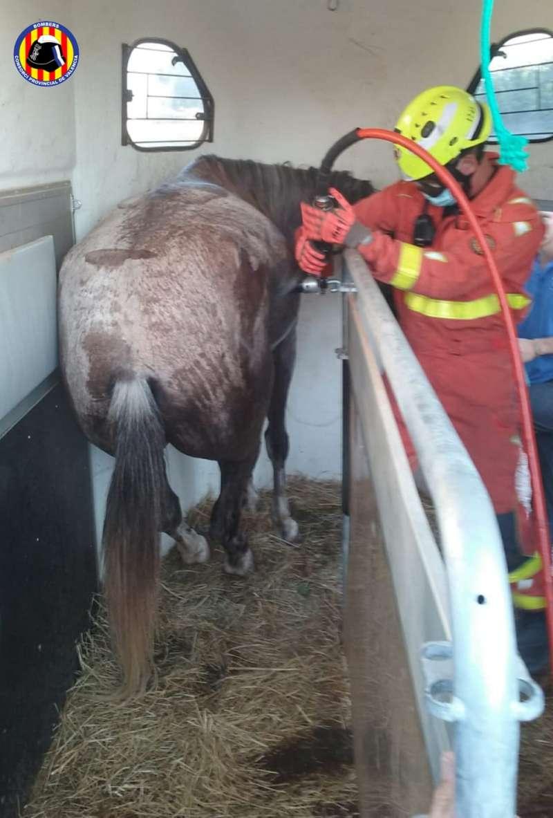 Un agente de bomberos intenta rescatar al animal. / EPDA