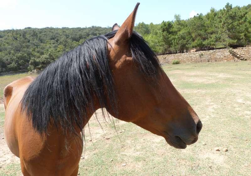 Imagen de archivo de un caballo. EPDA