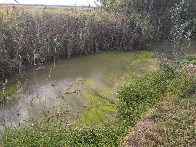 Contaminacion de la Albufera. EPDA
