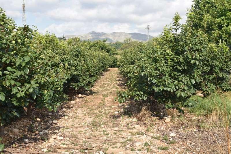 Unanimidad en el reconocimiento a os agrocultores
