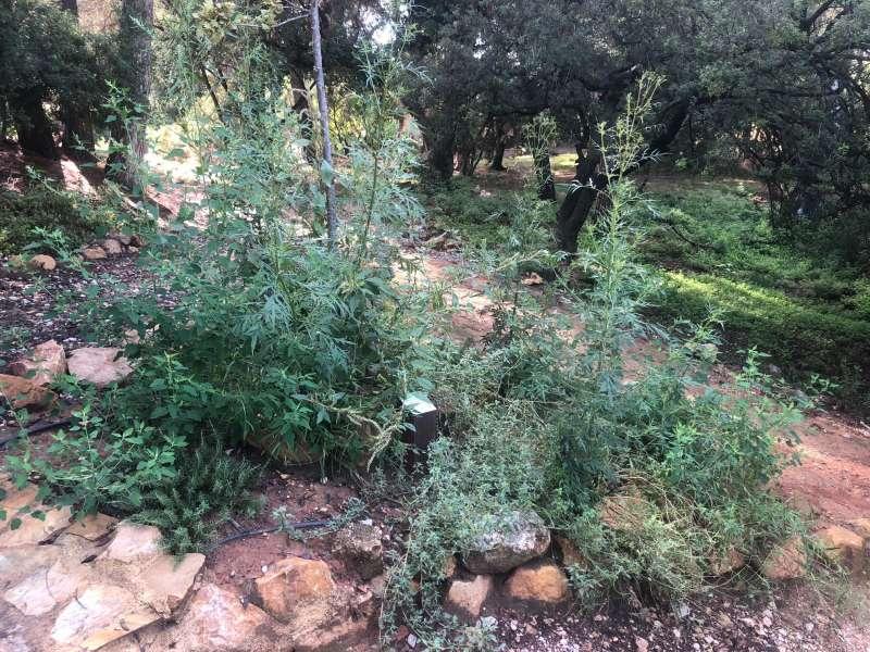 Arboretum en el Vedat
