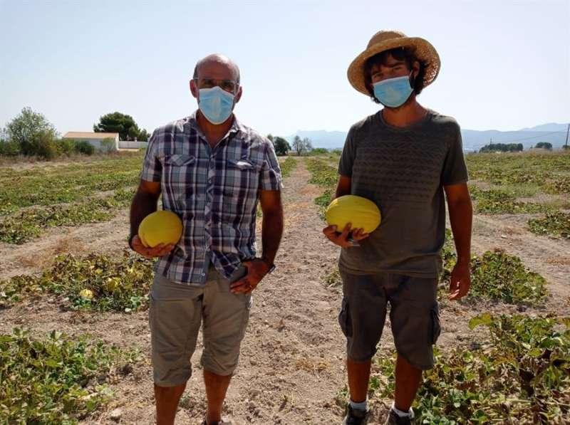 El investigador del Comav-UPV y coordinador del estudio, Salvador Soler (izda), y el agricultor Joan Ferrero Martínez en un campo en Ontinyent con dos ejemplares de Meló d