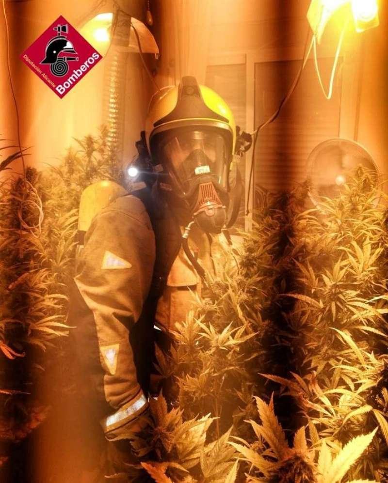 Imagen de la plantación encontrada al sofocar un incendio. EFE/Consorcio Provincial Alicante