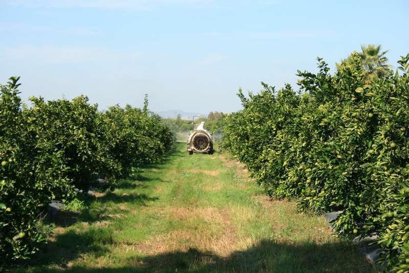 Imagen de archivo de un campo de cultivo valenciano.
