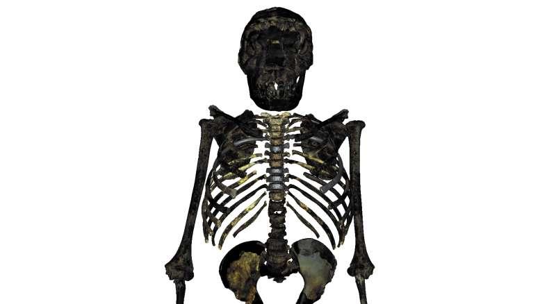 Reconstrucción del esqueleto del H.erectus juvenil de 1,5 millones de años. EPDA