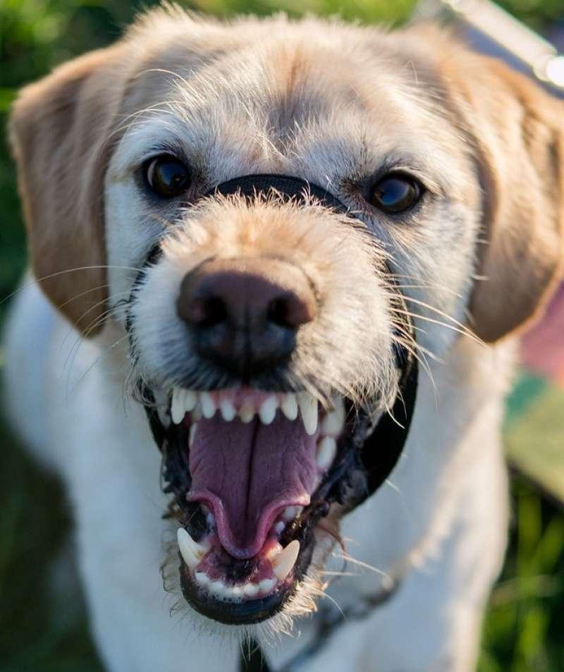 Imagen de archivo de un perro enseñando los dientes.