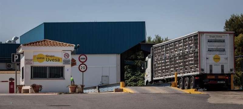 Un camión con gallinas a la entrada principal de la empresa cárnica Grupo Uvesa de Rafelbuñol (València), donde se han diagnosticado 6 casos de coronavirus. EFE