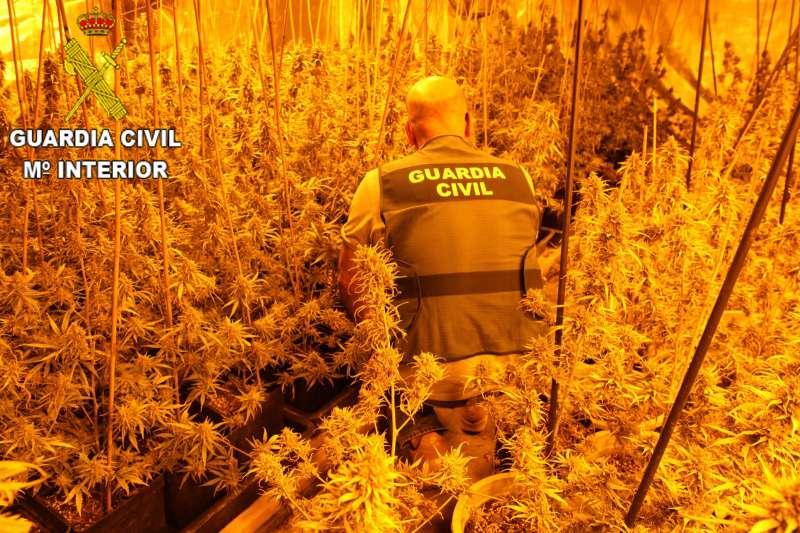 Un agente de la Guardia Civil junto a la plantación de marihuana