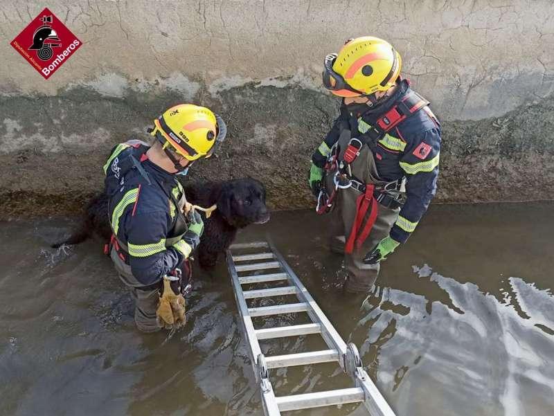 Los bomberos junto al perro en la acequia