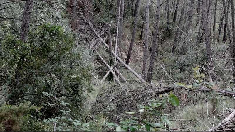 La limpieza del monte es también una cuestión de seguridad