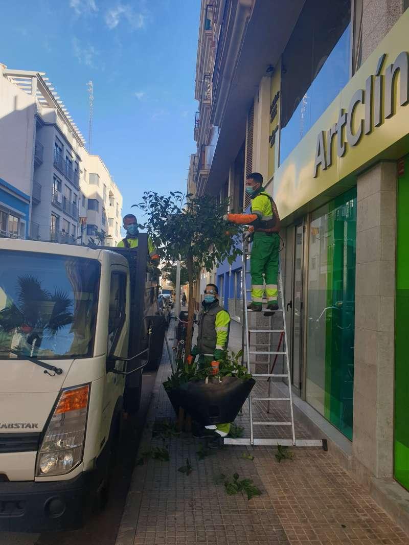 Poda de arbres a Vinaròs