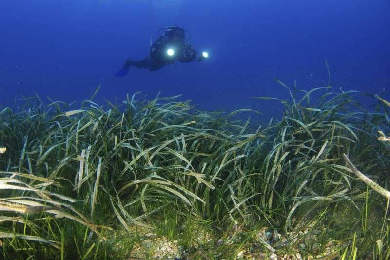 Cámara de Oceana filmando una pradera mixta de (Cymodocea nodosa) y (Posidonia oceanica).