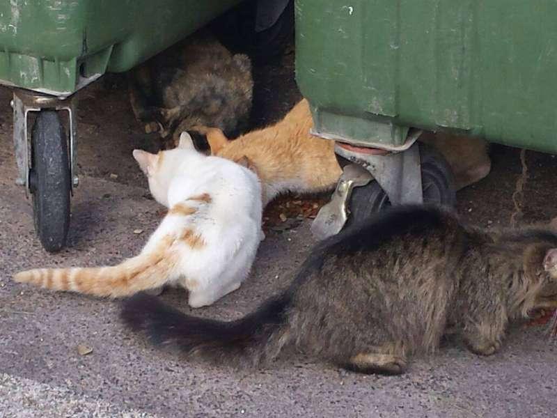 Colonia felina en Xàbia. FOTO PACMA