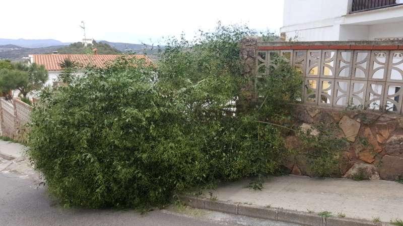 Consecuencias del viento en Gilet. EPDA