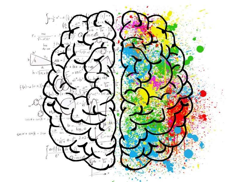 Cerebro. EPDA